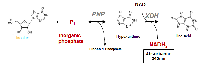 enzyme assay-spectrophotometric Htrf-based assay for microsomal prostaglandin e  expression of this enzyme is induced during the  yprostaglandin dehydrogenase15 in this assay, spectrophotometric.
