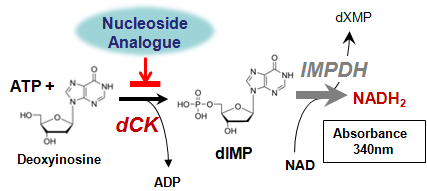 dCK phosphorylation principle